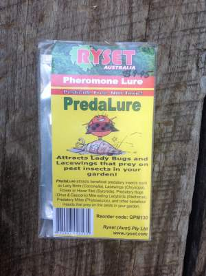 Predalure (beneficial insect attractant)
