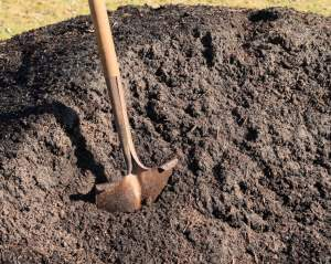 vegetable planting guide perth wa