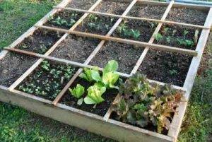 Square Foot Gardening Green Life Soil Co